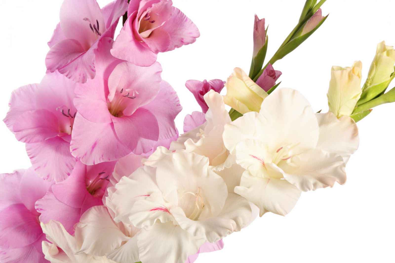 Affordable Wedding Flowers That Wont Break The Bank Weddingday