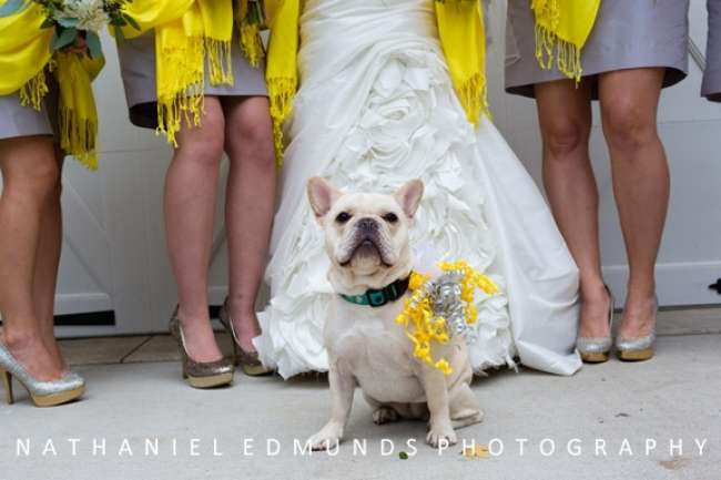 Dog incorporated into wedding festivities